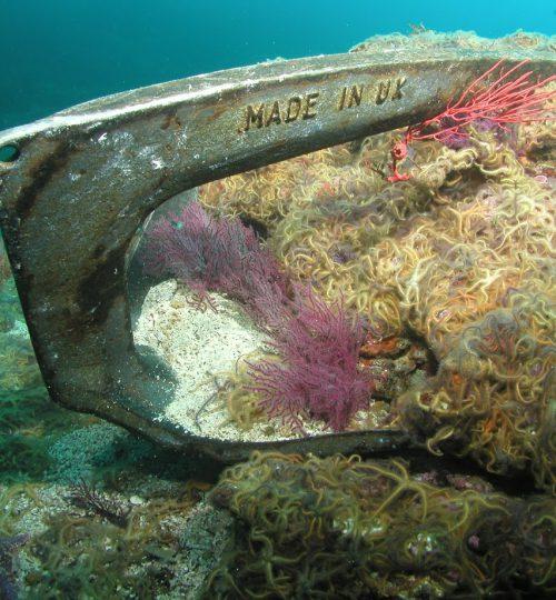 dive boat 245