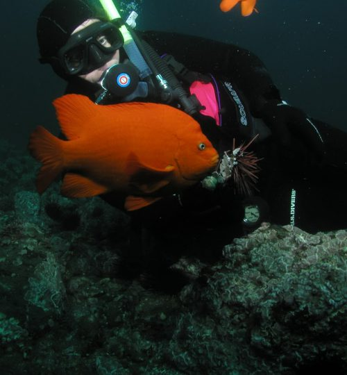 dive boat 291-1